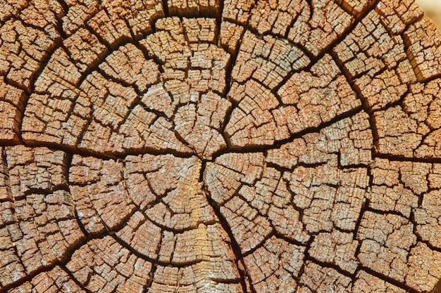 Parede, textura de árvore velha de cânhamo em alta resolução.