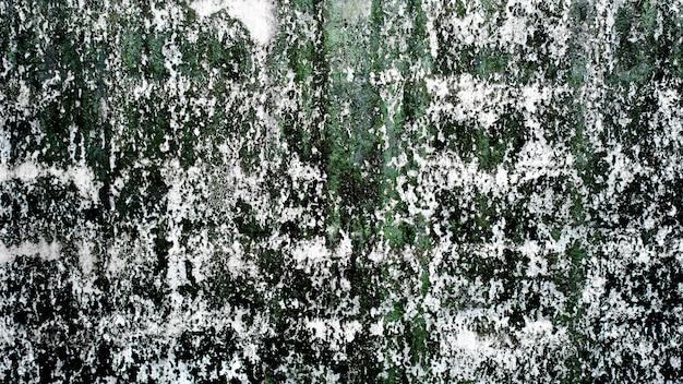 Parede velha suja do cimento com textura verde dos líquenes.