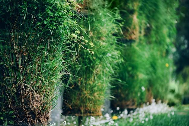Parede verde. conceito de jardim vertical amigável de eco. conceito de natureza, verão, primavera e jardim