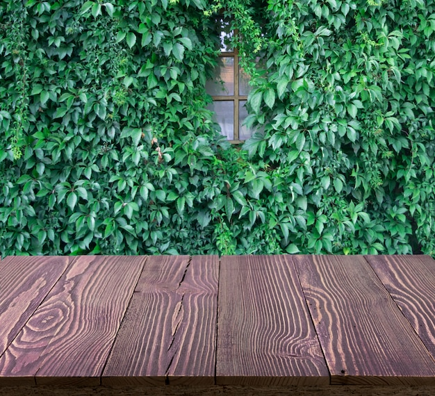 Parede verde luxuriante de hedera helix ou trepadeira hera padrão de folhagem de tapete
