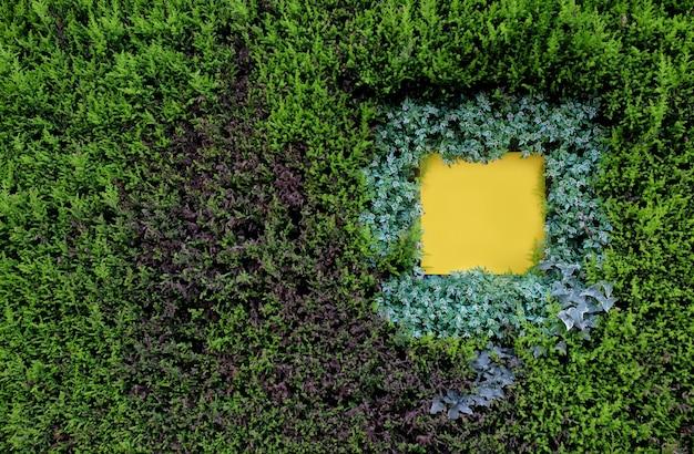 Parede verde natureza com quadrado em branco