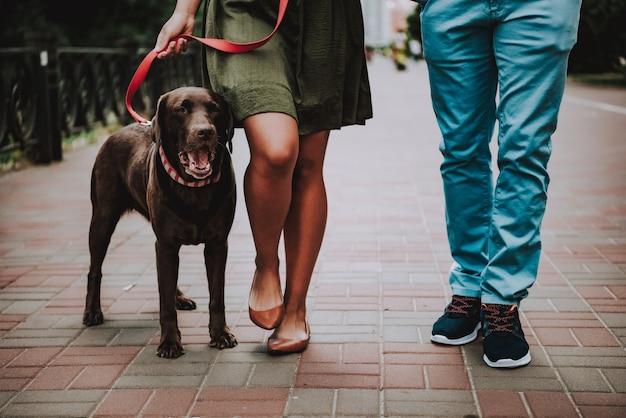 Pares afro-americanos novos que andam com cão.