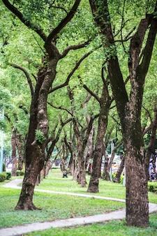 Park, uma cadeira no parque, relaxante, banyan trees em dunhua road, taipei. sentindo-se calmo