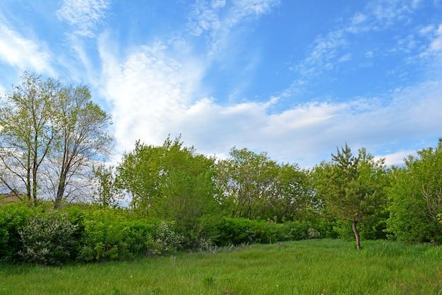 Parque agradável. clareira verde entre as árvores.
