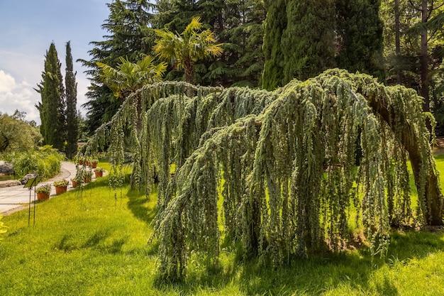 Parque aivazovsky paradise landscape park chorando cedro partenit crimea