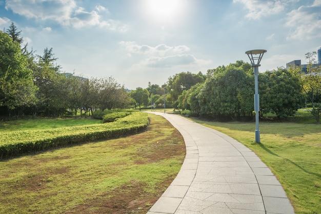 Parque bonito da luz da manhã em público com campo de grama verde