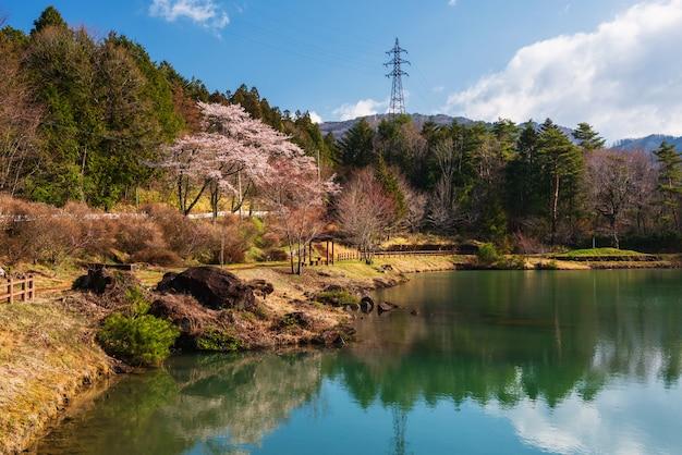 Parque cherry blossom no vale de kiso