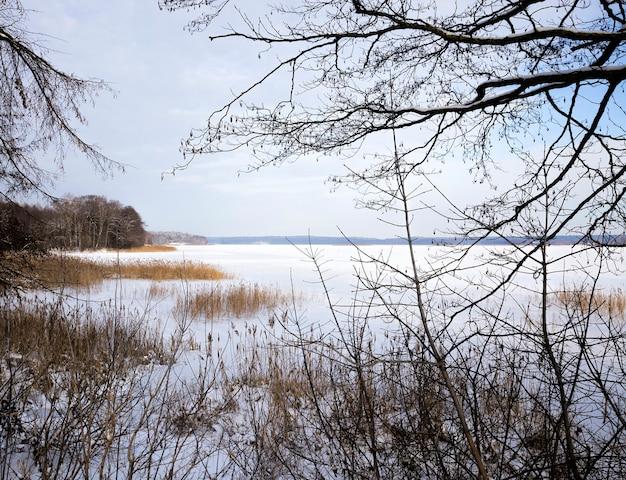 Parque claro e clima ensolarado, dia ensolarado e luz iluminam cristais de neve e geada nos galhos da grama e das árvores