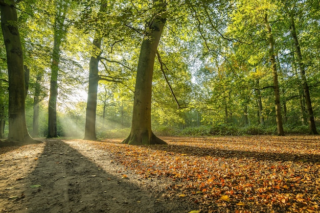 Parque coberto de árvores sob a luz do sol