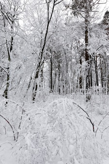 Parque coberto de neve no inverno