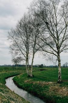 Parque coberto de vegetação sob um céu nublado em teufelsmoor, osterholz-scharmbeck