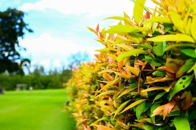 Parque com arbustos e gramados verdes, design de paisagem