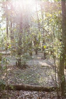 Parque com árvores ao pôr do sol