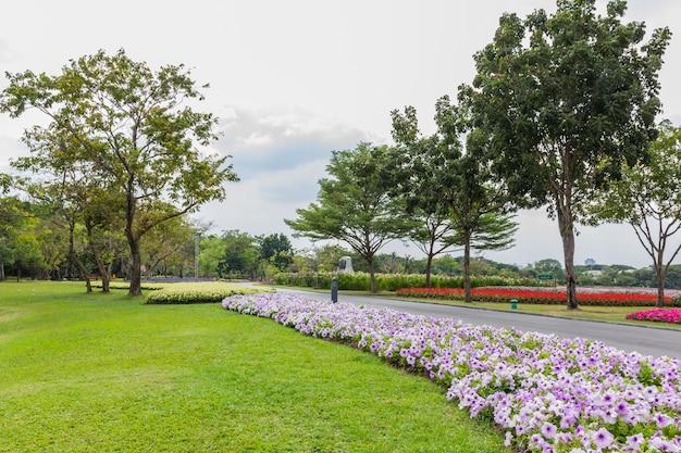 Parque com árvores e grama