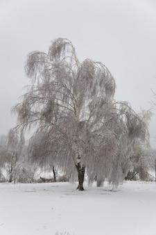 Parque com árvores no gelo. floresta de inverno