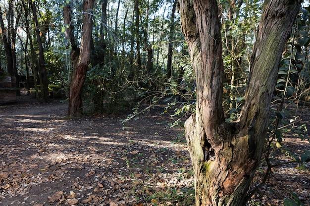 Parque com chão coberto de folhas secas