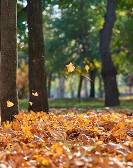 Parque da cidade de outono com árvores e folhas secas de amarelas
