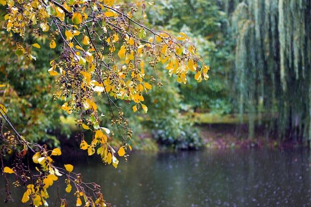 Parque da cidade no outono. árvores sobre o rio durante a chuva