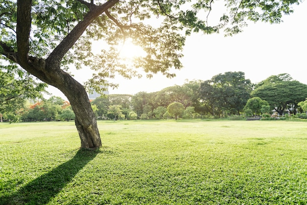 Parque de árvores ecologia ambiental natureza conceito