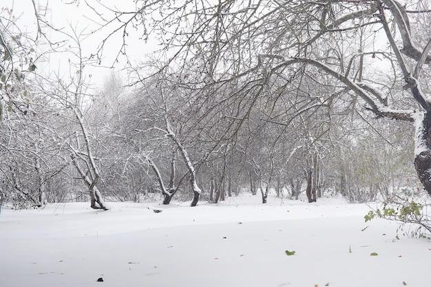 Parque de inverno coberto de neve e bancos. parque e píer para alimentação de patos e pombos. a primeira neve cobriu o parque de outono.