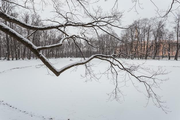 Parque de inverno em são petersburgo, rússia.