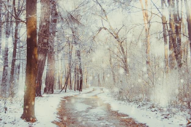 Parque de inverno em um dia ensolarado