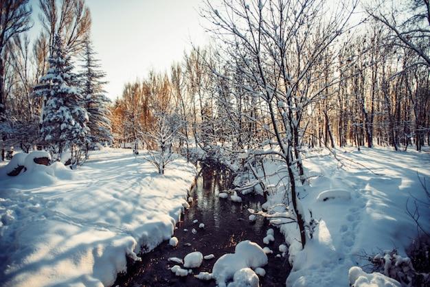 Parque de inverno na neve