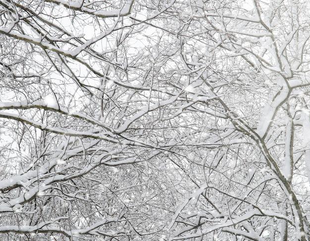 Parque de inverno sob a neve. tempestade de neve no parque da cidade. parque para passeios com toda a família sob a cobertura de neve.