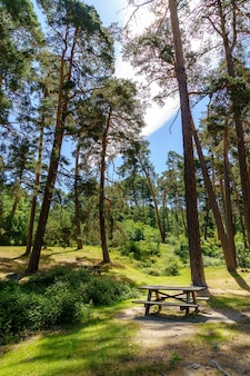 Parque de merendas com bancos, poltronas e pinheiros altos