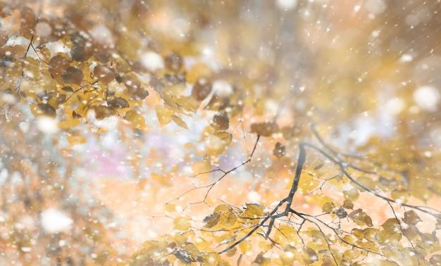 Parque de outono ao fundo nos dias da primeira neve