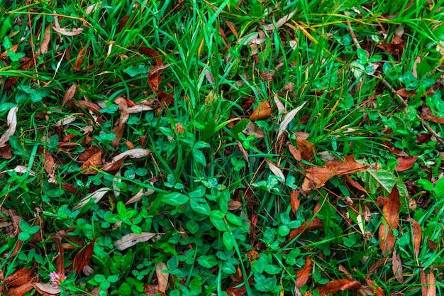 Parque de outono colorido. árvores de outono com folhas amarelas no parque outono. belgorod. rússia.