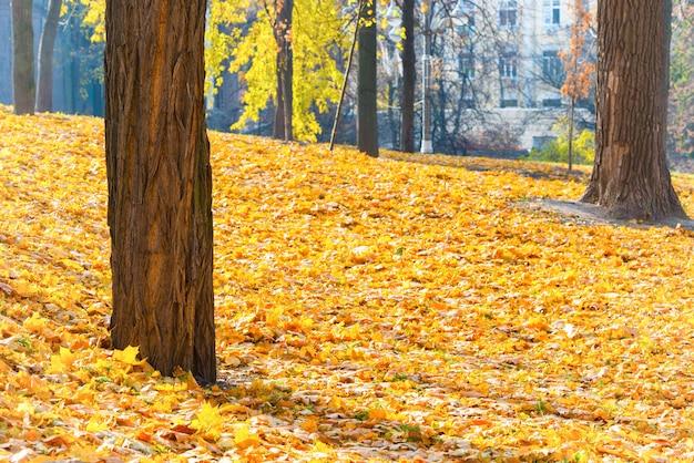 Parque de outono com árvores e folhas caídas de laranjas