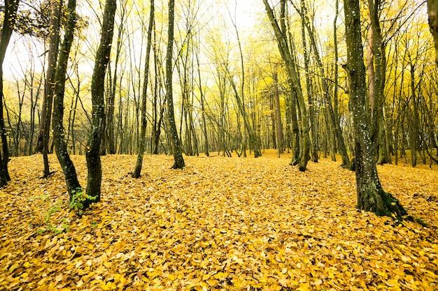 Parque de outono com árvores nuas