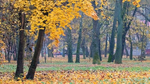 Parque de outono com folhas amarelas caídas perto da árvore