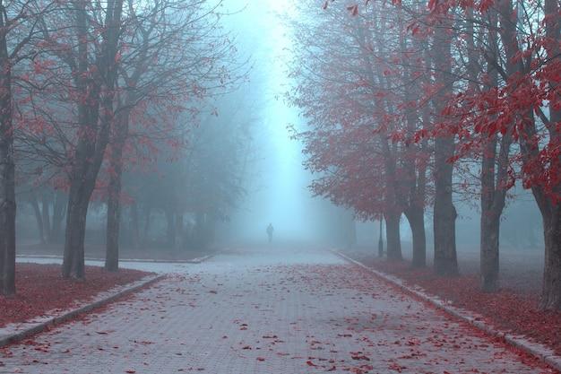 Parque de outono no meio do nevoeiro