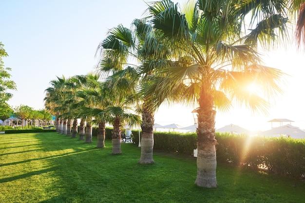 Parque de palmeiras verdes e suas sombras na grama.