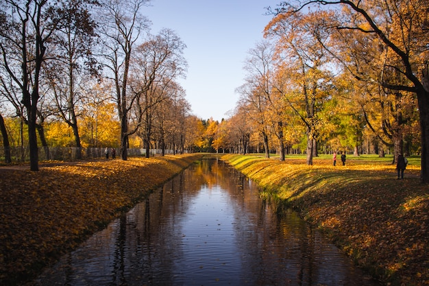 Parque do outono no tempo claro. outono dourado. outono no parque. folhagem amarela.