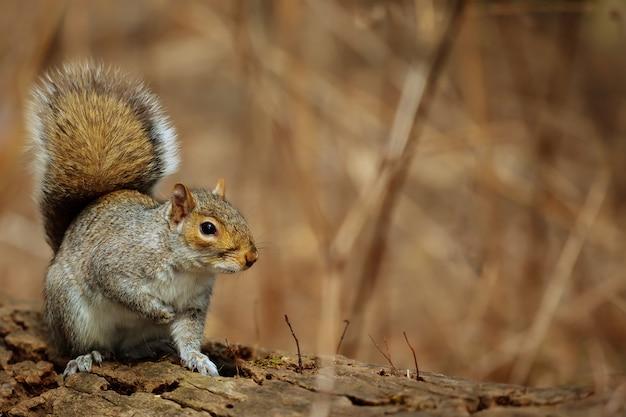 Parque esquilo floresta