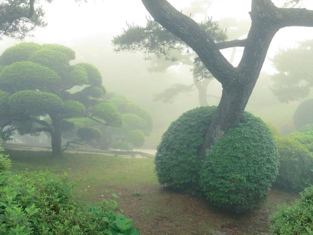 Parque japonês no verão