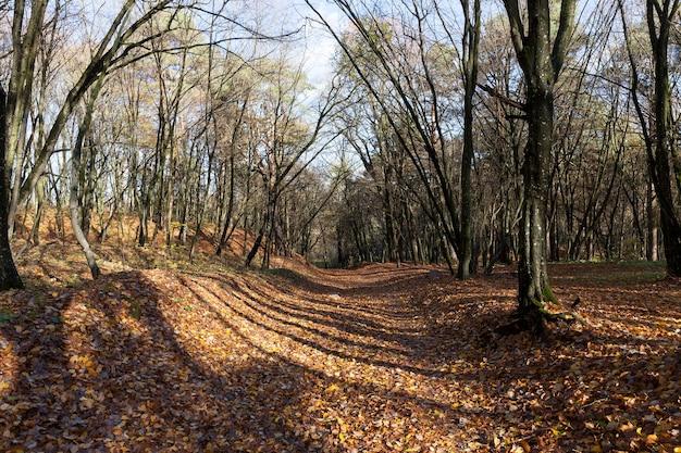 Parque montanhoso de outono com folhas caídas de bordo, clima ensolarado no início do outono