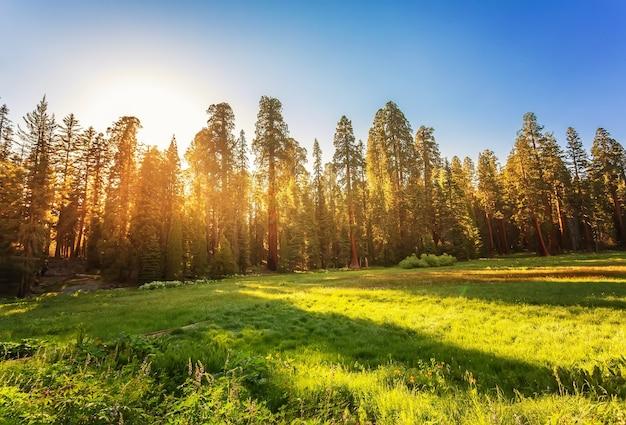 Parque nacional da sequoia em sierra nevada