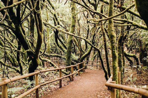 Parque nacional de garajonay, floresta de loureiros, laurisilva, la gomera, ilhas canárias, espanha