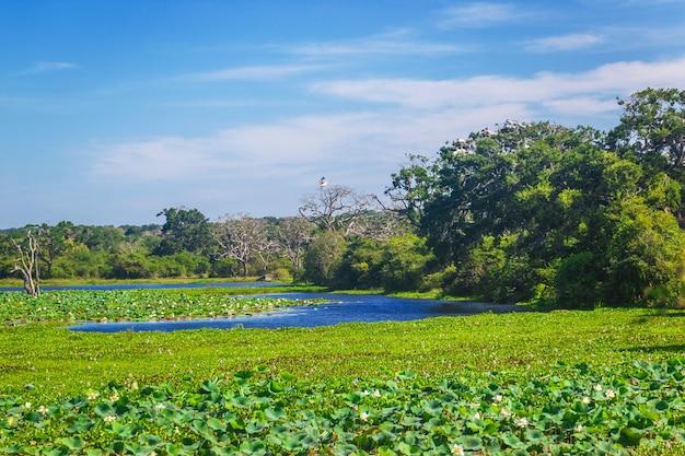 Parque nacional de yala, sri lanka, ásia. lago e árvores centenárias.