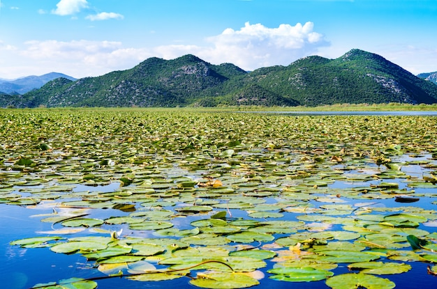 Parque nacional do lago skadar, montenegro