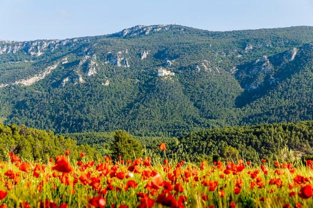 Parque natural da fonte vermelha com campo de papoulas e céu azul em alcoi, alicante.