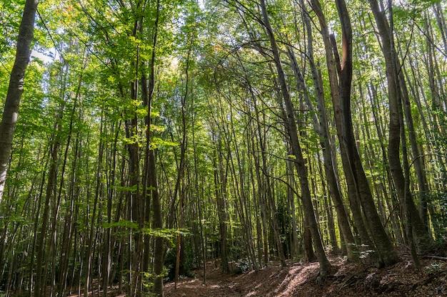 Parque natural de montseny no outono.