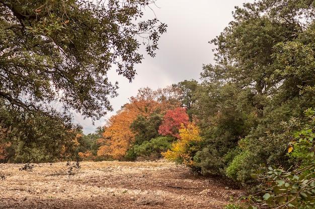 Parque natural fuente roja em alcoi em um dia nublado de outono, alicante, espanha.