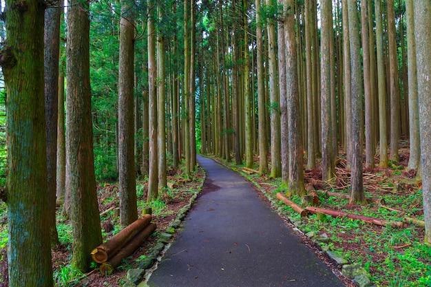 Parque no japão