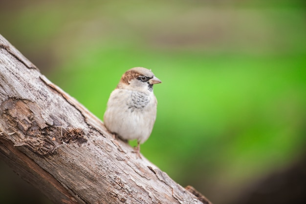 Parque ornitologia pássaro pardais