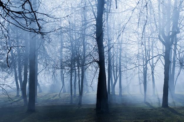 Parque outono com névoa de mistério